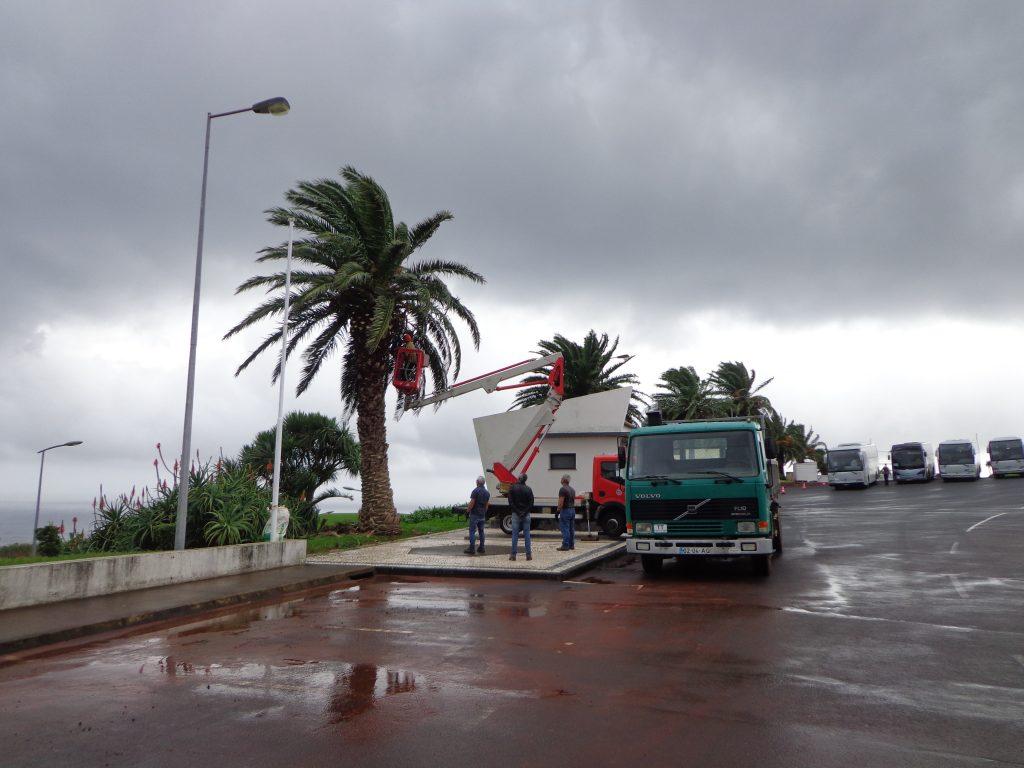 Limpezas e podas, Vila de Nordeste (1)