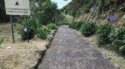 Limpeza do acesso à Praia do Lombo Gordo