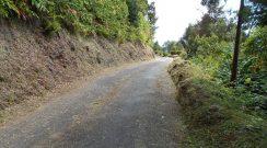 Limpeza de caminho de acesso à Praia do Lombo Gordo