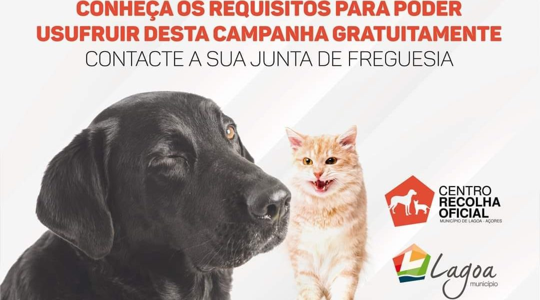 Esterilização gratuita de cães e gatos